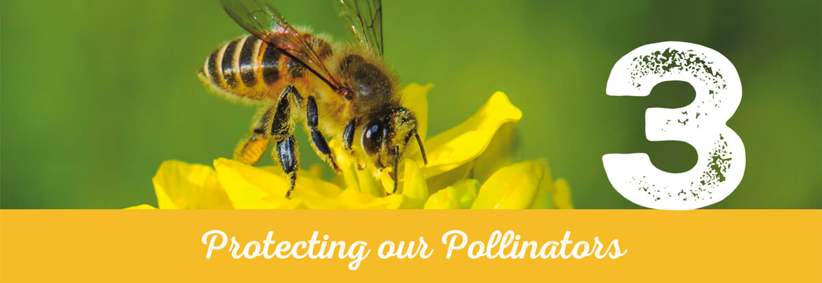 Protecting our Pollinators